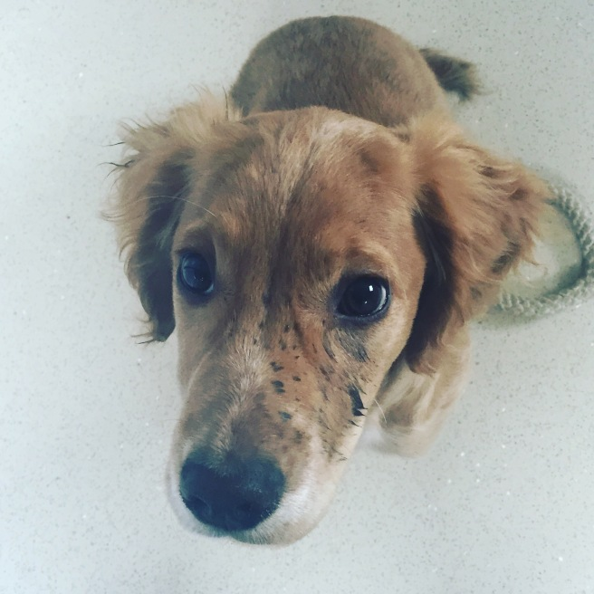 Mucky pup after rolling in puddles