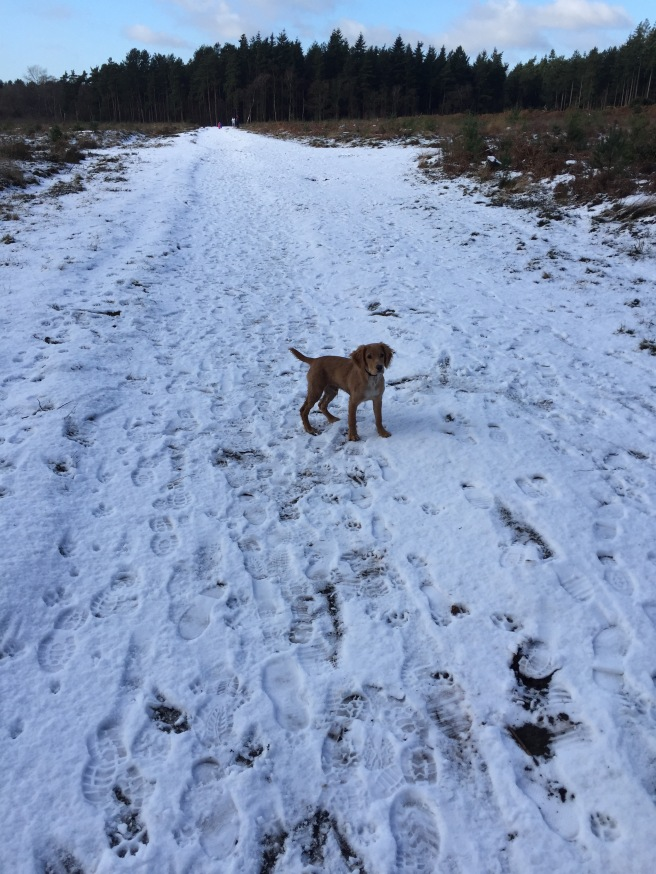 Loving the snow in Norfolk